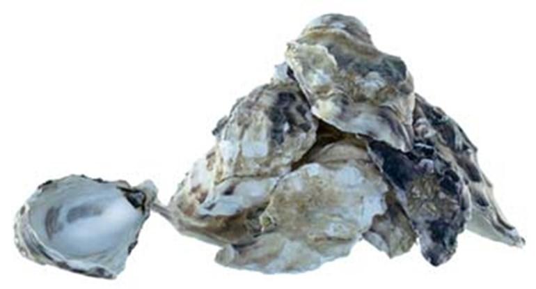 calcium-carbonicum-hahnemanni-globuli-kaufen.jpg