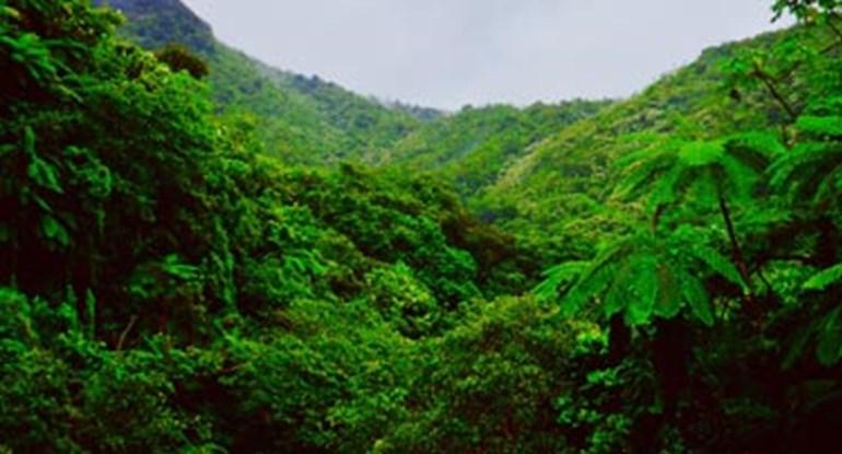 regenwald-yanonami_375.jpg