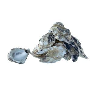 Calcium-carbonicum-hahnemanni-globuli.jpg