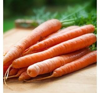 Daucus-carota-Globuli