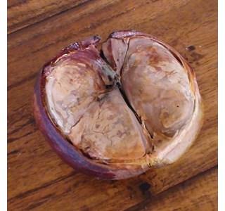 Xylocarpus-granatum-Globuli