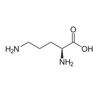 Ornithinum-monohydrochloricum-Globuli